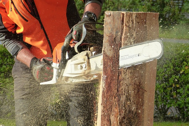 How to sharpen your chainsaw blades the homester how to sharpen your chainsaw blades keyboard keysfo Choice Image
